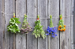 Various medical herbs on wooden wall. Various medical herbs on old wooden farm wall royalty free stock photography