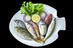 Various Mediterranean fishes bogue fish, red mullet, spotted spinefoot, parrotfish on white plate royalty free stock image