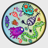 Various microbes, colorful image of creature Stock Image