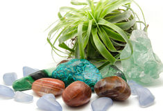 Various Minerals and crystals:. Various minerals and crystals displayed with air plant Royalty Free Stock Images