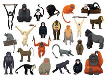 Various Monkey Poses Vector Illustration Royalty Free Stock Photo