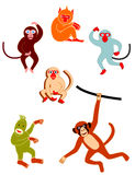 Various Monkeys. You can use for such as greeting cards, children books or web Stock Images