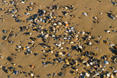 Various multicolored pebbles on wet sand. Royalty Free Stock Image