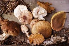 Various mushroom on the ground Royalty Free Stock Photos
