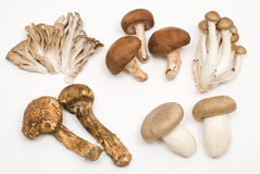 Various mushrooms Stock Photo