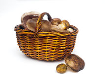 Various mushrooms Royalty Free Stock Photos
