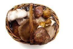 Various mushrooms Royalty Free Stock Images