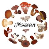 Various mushrooms laid out in a circle stock illustration