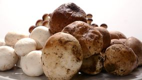 Various mushrooms. On white background stock footage
