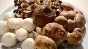 Various mushrooms stock video