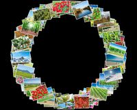 The various nature photos arranged in round frame. Various nature photos arranged in round frame royalty free stock photos