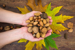Various nuts in hands Royalty Free Stock Photos
