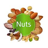 Various nuts round isolated composition. Various nuts round composition isolated on white background illustration. Pecan, almond, coconut, walnut, cocoa pod Royalty Free Stock Photography