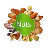 Various nuts round isolated composition. Various nuts round composition isolated on white background vector illustration. Pecan, almond, coconut, walnut, cocoa Stock Photos
