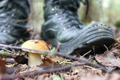 Boletus mushrooming man Royalty Free Stock Photography