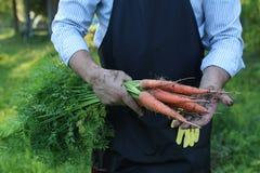 Gardener man holding carrot harvest in a hand Royalty Free Stock Image