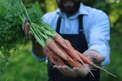 Gardener man holding carrot harvest in a hand Royalty Free Stock Photography