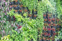Various Of Green Plants Wall Decoration. Abstract Beautiful Nature Background Stock Image