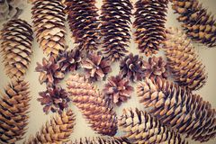 Various old cones from a coniferous tree in retro style Stock Photography