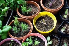 Various Organic Vegetables garden in house area stock photo