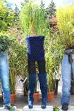 Various pants used as flowerpot Royalty Free Stock Photo