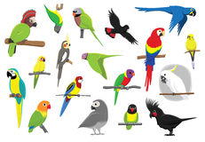 Various Parrots Cartoon Vector Illustration Stock Photography
