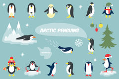 Various Penguins Cartoon Vector Illustration Royalty Free Stock Image