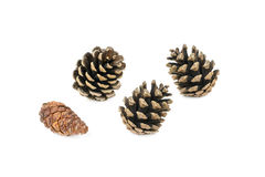 Various pine cone trees isolated on white Stock Photography