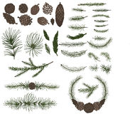 Various pine,spruce branches ,cones Stock Photos
