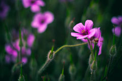 Various pink flowers field background Stock Image