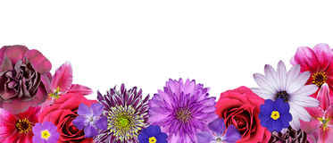 Various Pink, Purple Red Flowers at Bottom Row Royalty Free Stock Image