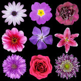 Various Pink, Purple, Red Flowers Isolated Royalty Free Stock Image
