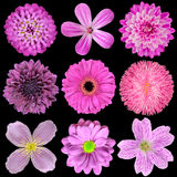 Various Pink, Purple, Red Flowers Isolated Stock Images