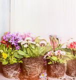Various plants and flowers for potting. Garden or balcony flowers Stock Photo