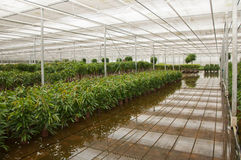 Various plants in a plant nursery Stock Photography