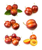 Various plum groups Stock Photography