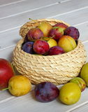 various plums in a wicker pot - autumn gifts Royalty Free Stock Images