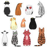 Various posing cats set Royalty Free Stock Images