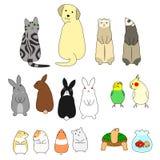 Various posing pes set. Various cute pets animals set Stock Photo