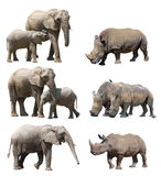 The various postures of the african elephant and white rhinoceros or square-lipped rhinoceros on white background Stock Photos