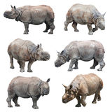 The various postures of the indian rhinoceros or greater one-horned rhinoceros on white background, Super Series. India rhinoceros is one of the three types Stock Photos