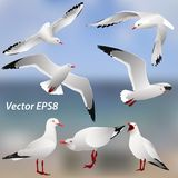 The various postures of the seagulls on the sea  background Stock Photos