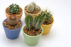 Various Potted Cacti royalty free stock images