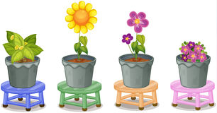 Various potted plants Stock Photo