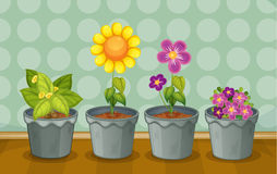Various potted plants Stock Image