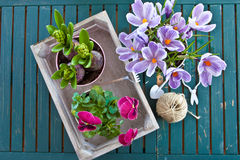 Various potted spring flowers Royalty Free Stock Photography
