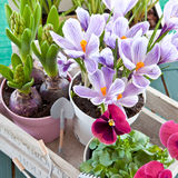 Various potted spring flowers Stock Photos