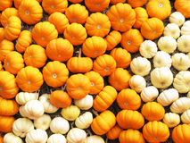 Various pumkins Royalty Free Stock Images