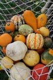 Various pumpkins Royalty Free Stock Photo