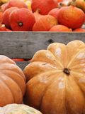 Various pumpkins Royalty Free Stock Images